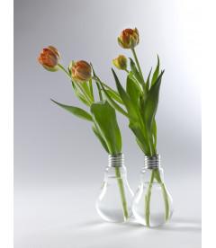 Geant Bulb Edison Medium