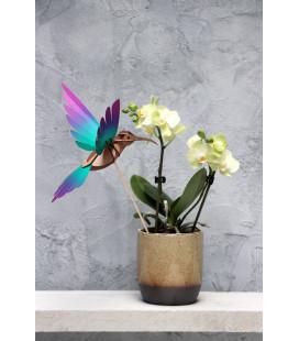 Kit Colibri Vert et Violet DIY
